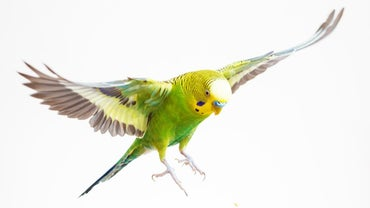 What Are Some Cute Parakeet Names?