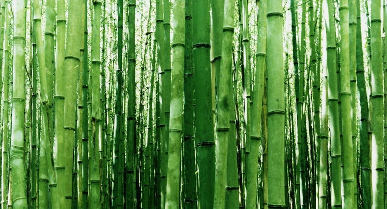 cuttings-bamboo