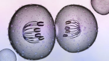 When Does Cytokinesis Occur?