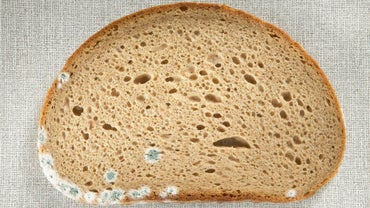 What Are the Dangers of Eating Moldy Bread?