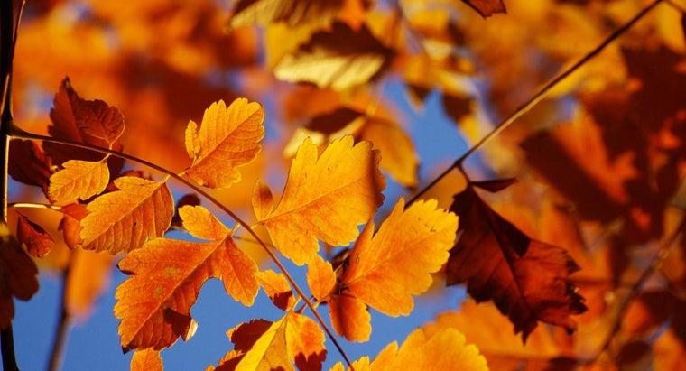 day-fall-start