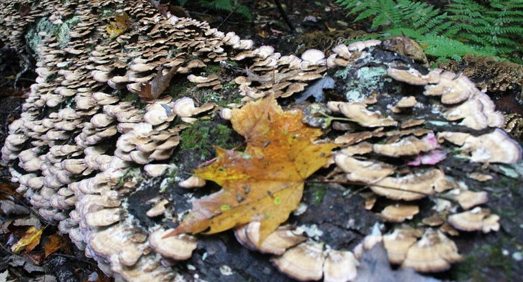 decomposers-important
