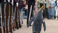 Who Is the Most Decorated Military Penguin?