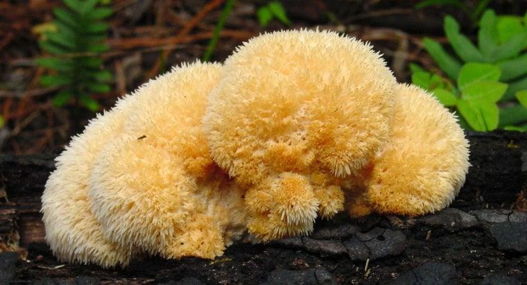 definition-fungi