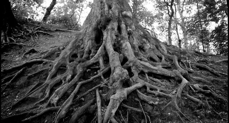 definition-root-uptake