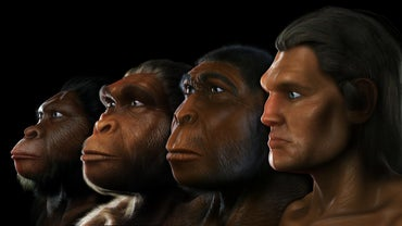 Where Did Australopithecus Live?