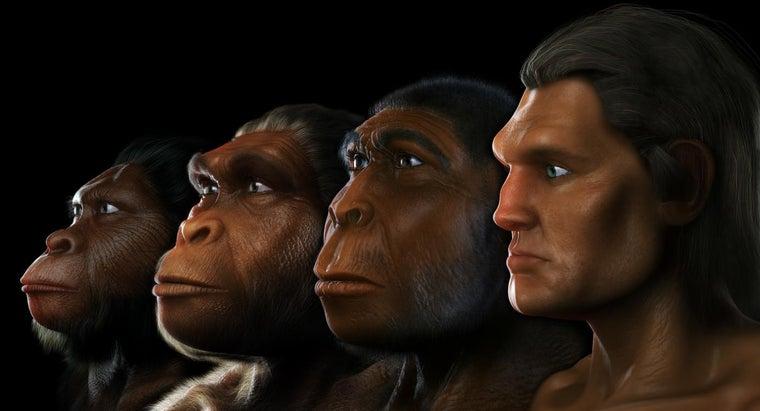did-australopithecus-live
