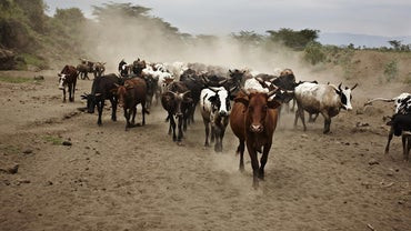 Why Did Cattle Drives End in the Late 1800s?