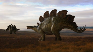 When Did Dinosaurs Roam the Earth?