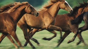 When Did Horses Arrive in North America?
