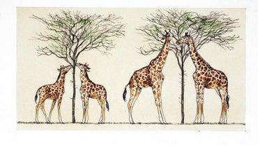 How Did Lamarck Explain Why Giraffes Have Long Necks?