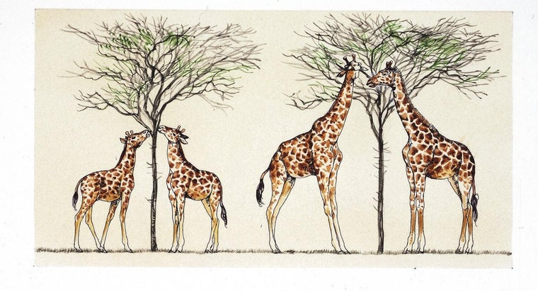 did-lamarck-explain-giraffes-long-necks