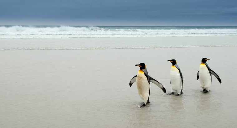 did-penguins-waddle