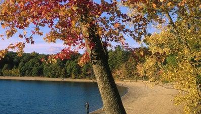 Why Did Thoreau Leave Walden Pond?