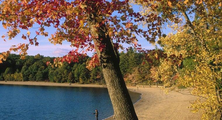 did-thoreau-leave-walden-pond