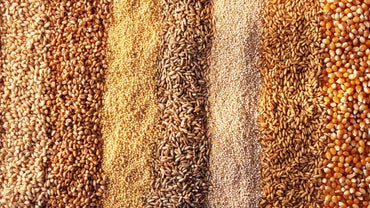What Is the Difference Between Barley and Wheat?