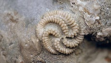 What Is the Difference Between a Cast Fossil and a Mold Fossil?