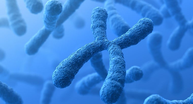 difference-between-chromosomes-genes