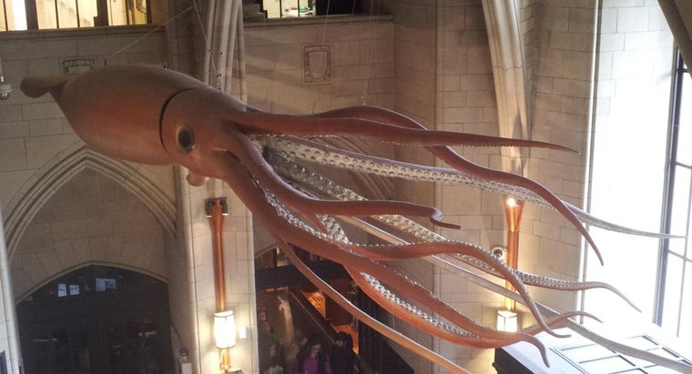 difference-between-colossal-squid-vs-giant-squid