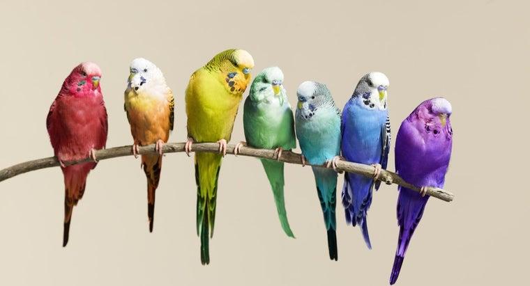 difference-between-genus-species