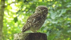 What Is the Difference Between Nocturnal and Diurnal Animals?