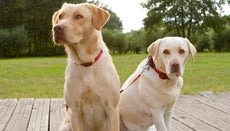 What Is the Difference Between Purebred and Hybrid?
