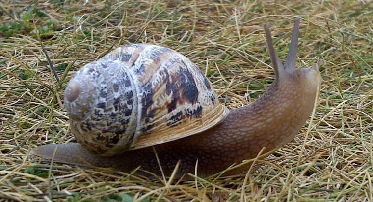 difference-between-snail-vs-slug