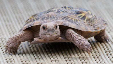 What Is the Difference Between a Turtle and a Tortoise?
