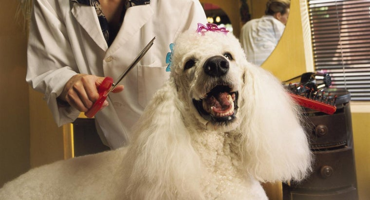 different-grooming-cuts-poodles