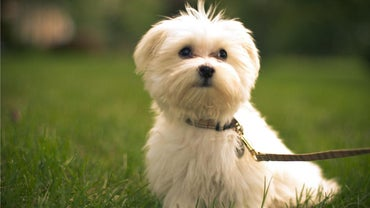 What Are Some Different Type of Maltese Cuts?