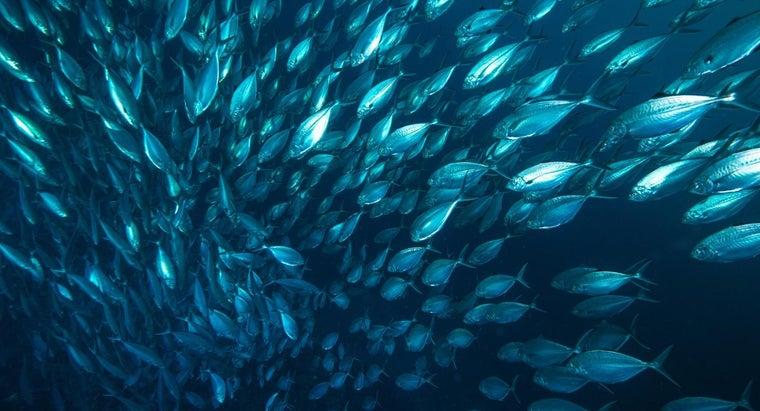 different-types-fish