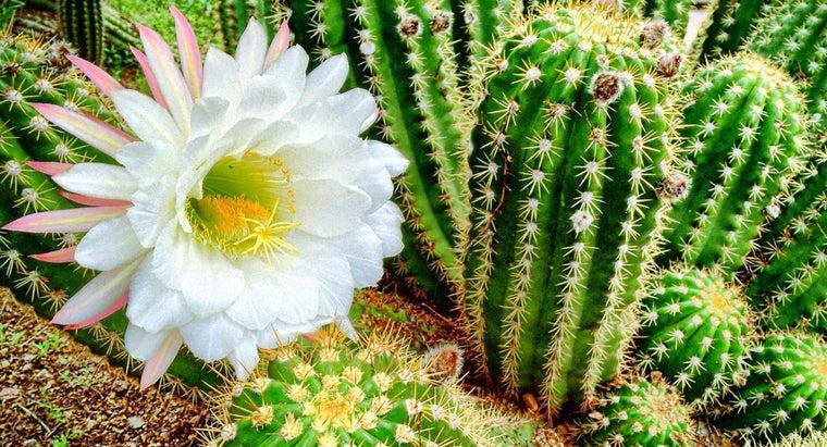 different-types-flowering-cactus-plants