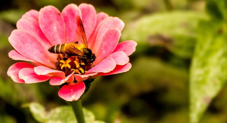 different-types-honey-bees