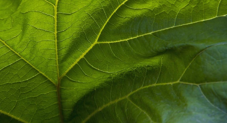 different-types-leaves