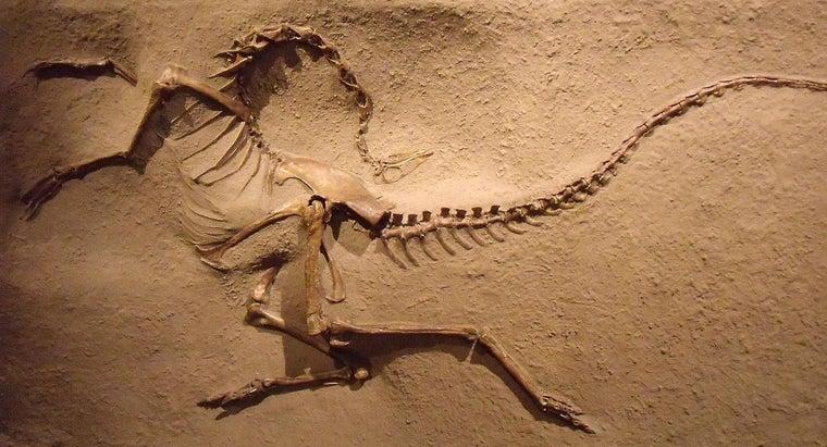 dinosaur-bone