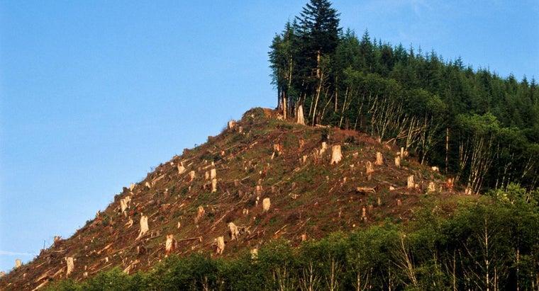 disadvantages-deforestation