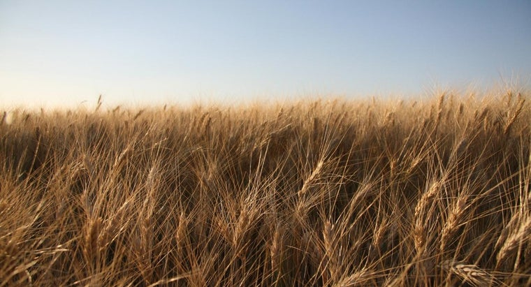 disadvantages-genetically-modified-crops