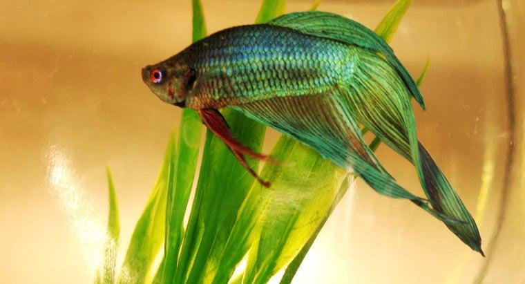 disease-symptoms-pet-fish