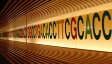 What Is DNA Made From?