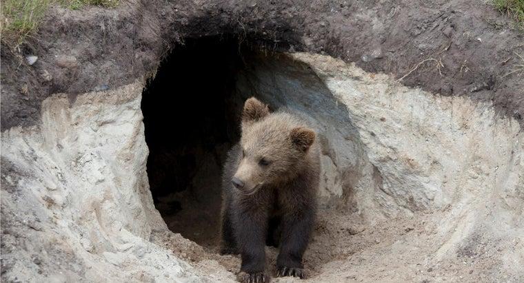 bears-live-caves