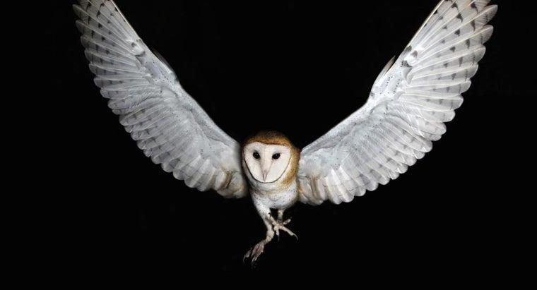 birds-fly-night
