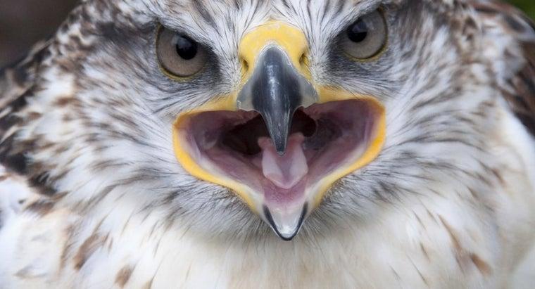 birds-teeth