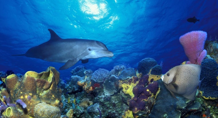 dolphins-live-coral-reefs