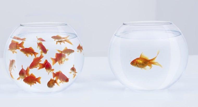 fish-brains