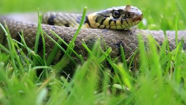 Do Grass Snakes Bite?