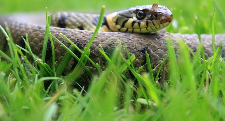 grass-snakes-bite