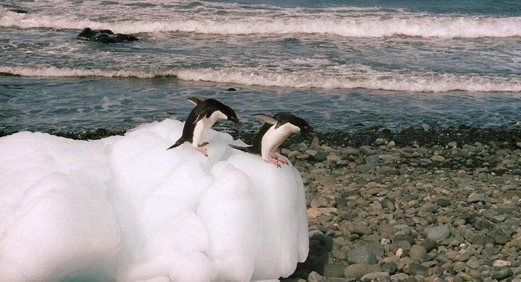 penguins-migrate
