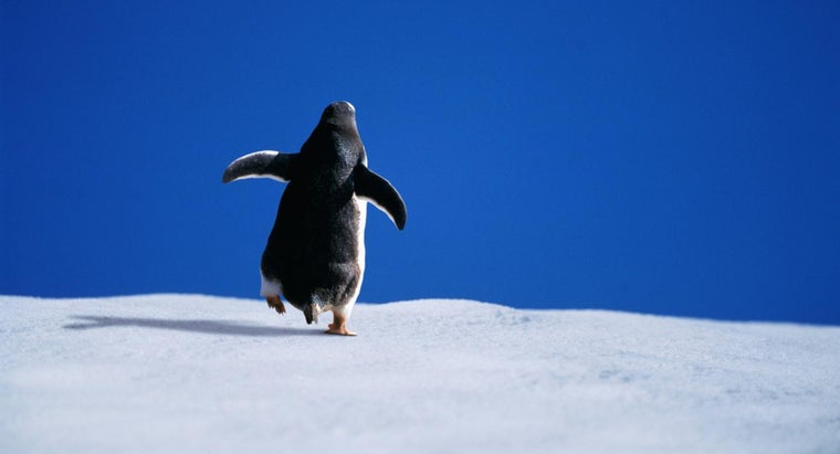 polar-bears-eat-penguins