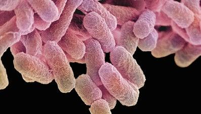 Does Freezing Kill Salmonella?