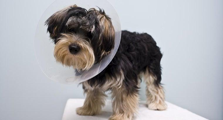 dog-behave-after-being-neutered